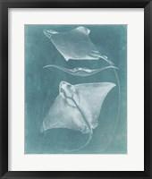 Morning Swim III Framed Print