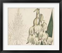 Tropical Curtis Botanical II Framed Print