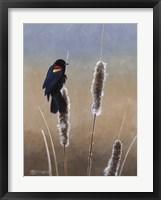 Redwing Morning I Framed Print