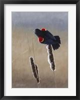 Redwing Morning II Framed Print