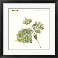 Watercolor Leaf Study II Framed Print