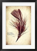 Feather in Color III Framed Print