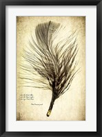Feather on the Wind II Framed Print
