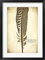 Feather on the Wind VI Framed Print