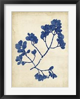Indigo Leaf Study III Framed Print