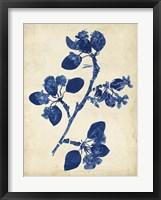 Indigo Leaf Study IV Framed Print