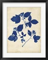 Framed Indigo Leaf Study VI