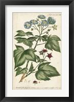 Framed Chambray Botanical I