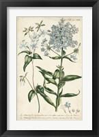 Framed Chambray Botanical II
