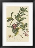 Framed Miller Foliage & Fruit I