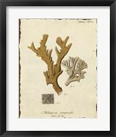 Natura Coral I Framed Print