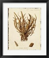 Framed Natura Coral V