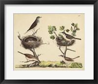Framed Wrens, Warblers & Nests I