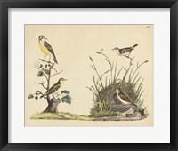 Wrens, Warblers & Nests II Framed Print