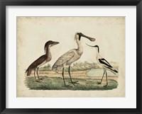 Framed Avocet & Boat-Billed Heron
