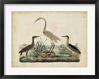 Framed Great White Heron & Night Heron