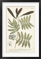 Framed Miller Ferns I