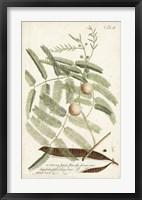 Framed Miller Ferns II