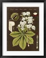 Chestnut on Suede Framed Print