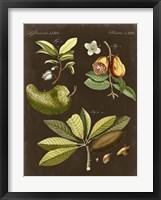 Breadfruit on Suede Framed Print