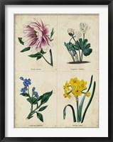 Botanical Grid II Framed Print