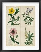 Framed Botanical Grid IV