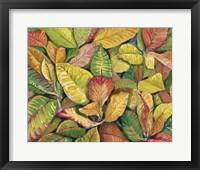 Tropical Close Up II Framed Print