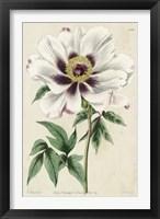 Imperial Floral II Framed Print