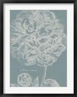 Graceful Peony II Framed Print