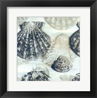 Framed Shell engraving 2