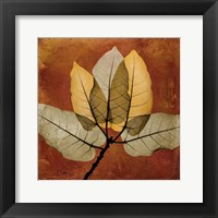 Framed Golden Ficus Burkey