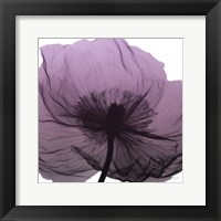 Framed Poppy Purple