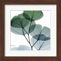 Framed Dull Eucalyptus Mate