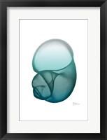 Water Snail Framed Print