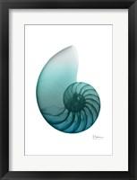 Water Snail 4 Framed Print