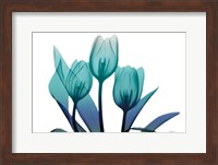Framed Tulips