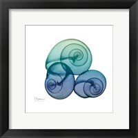 Framed Sea Sky Snails