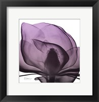 Framed Magnolia Wine Beauty