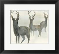 Framed Deer Trio