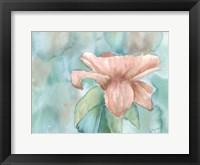 Blush Rose 2 Framed Print