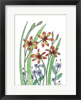 Framed Blackberry Lily