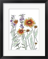 Framed Common Blanket Flower