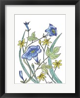 Ivey Leaved Morning Glory Framed Print
