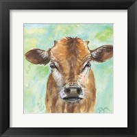 Little Bull Framed Print