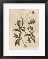 Floral Earthtone Four Framed Print