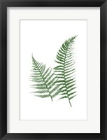 Green Ferns Framed Print