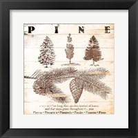 Framed Pine