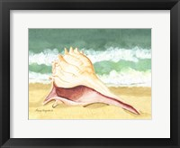 Framed Seashell I