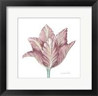 Framed Romantic Tulip 1