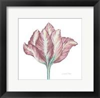 Framed Romantic Tulip 2